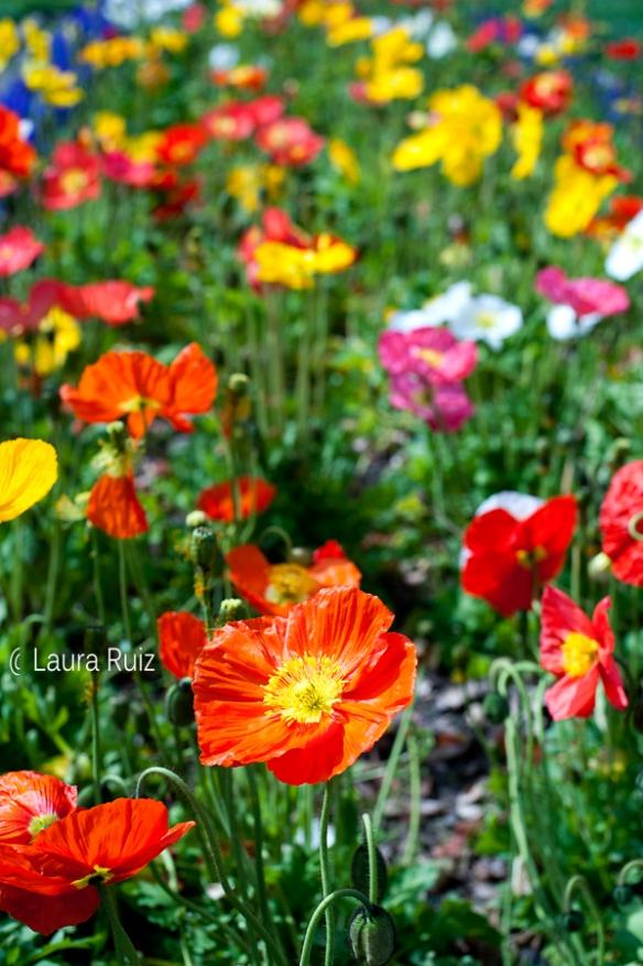 fbsacramentoflowers